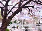 神戸北野美術館 ピックアップ01